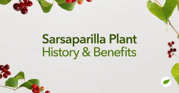 Sarsaparilla-Plant-Uses-Benefits