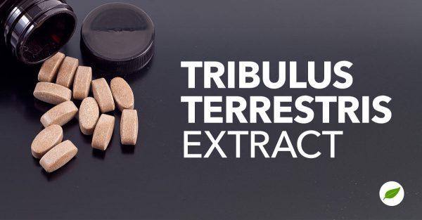 Tribulus-Terrestris-Extract