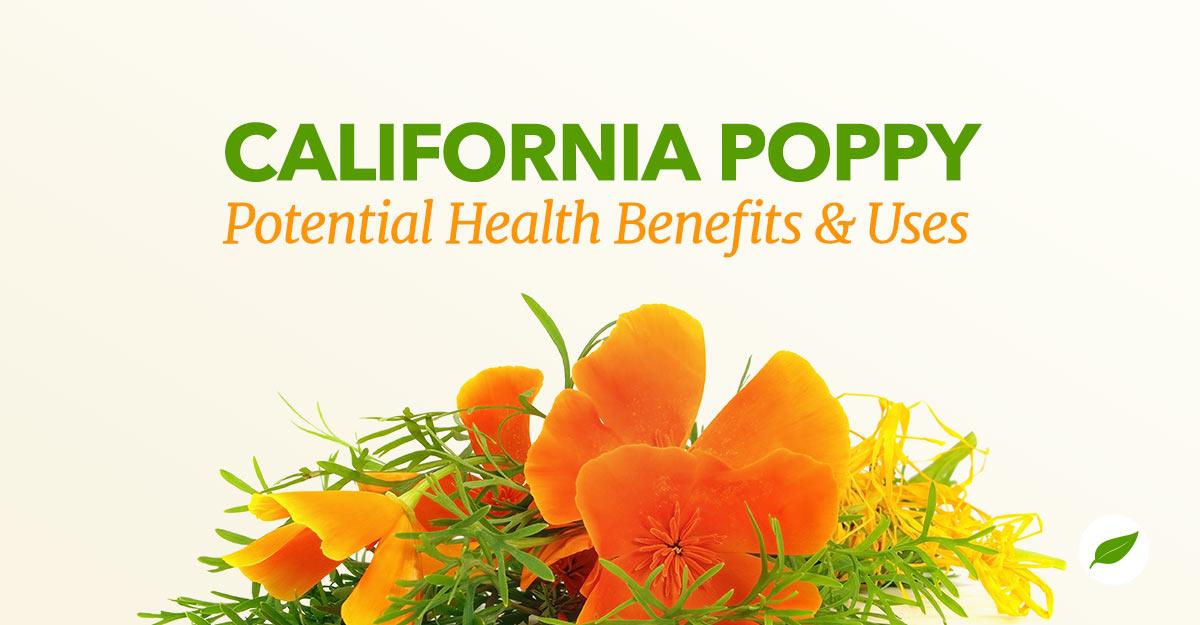 California poppy uses