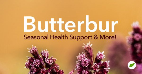 butterbur uses