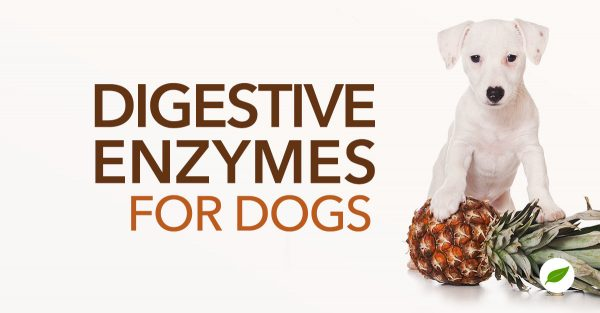 digestive-enzymes-for-dogs