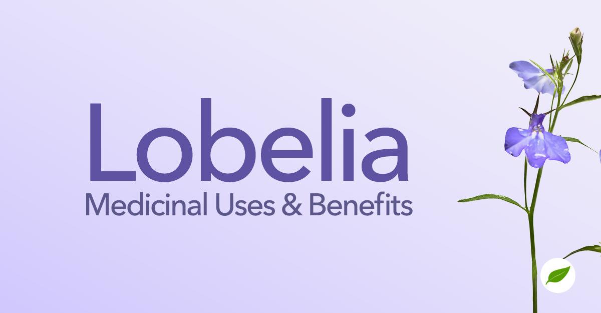 Lobelia-Uses