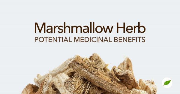marshmallow-herb-benefits