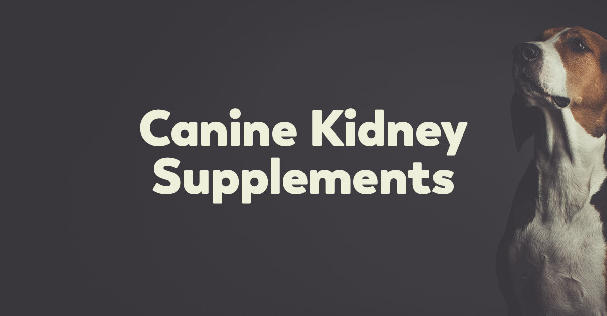 kidney supplements for dogs