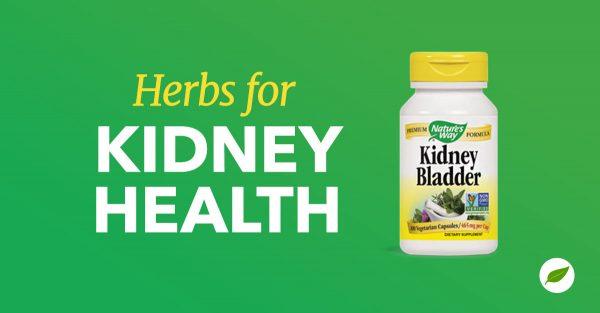 Kidney-Health-Herbs-Health