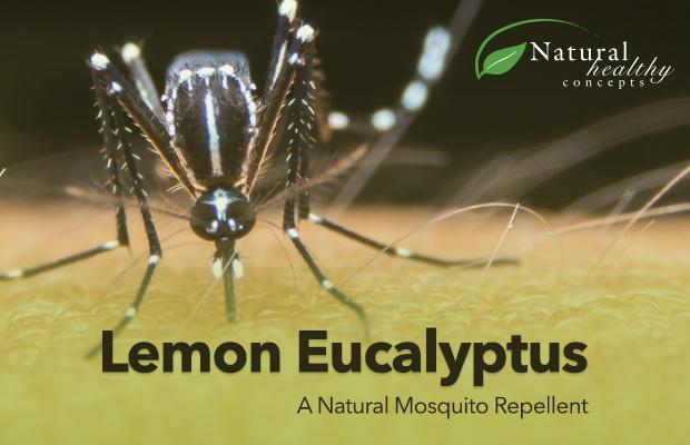 061216-Lemon-Eucalyptus