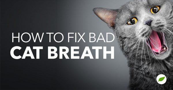 cat bad breath