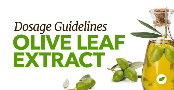 olive leaf extract dosage