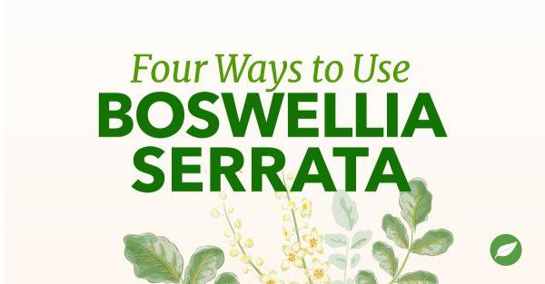 boswellia uses