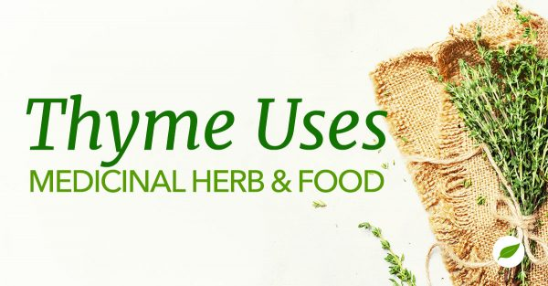 Thyme-Uses-Health