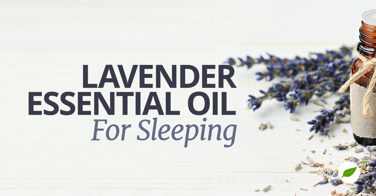 Lavender-Sleeping