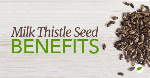 Milk-Thistle-Seed-Benefits