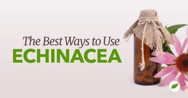 Echinacea plant uses