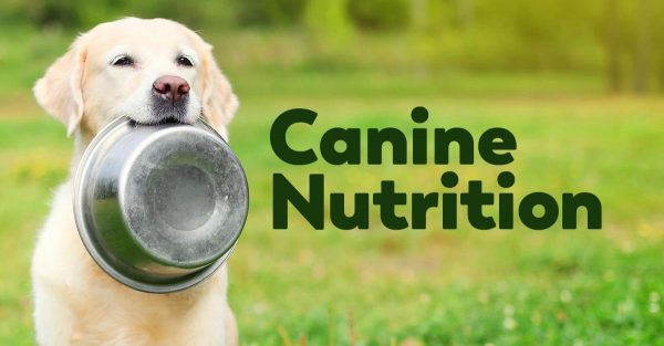 canine nutrition