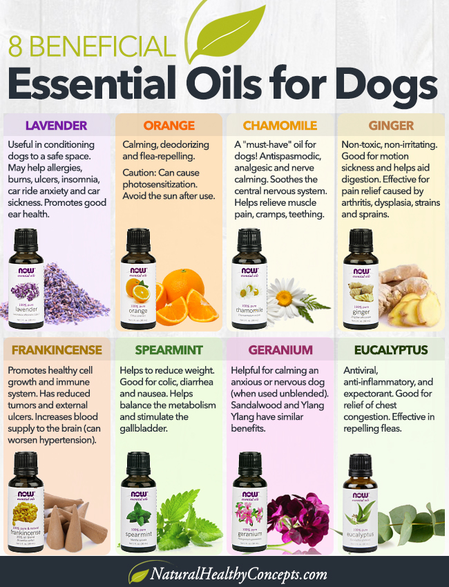 Essential-Oils-for-Dogs-Infographic