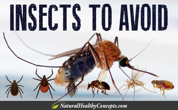 Insects-to-Avoid