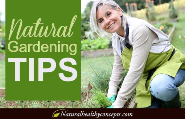Natural vegetable Gardening