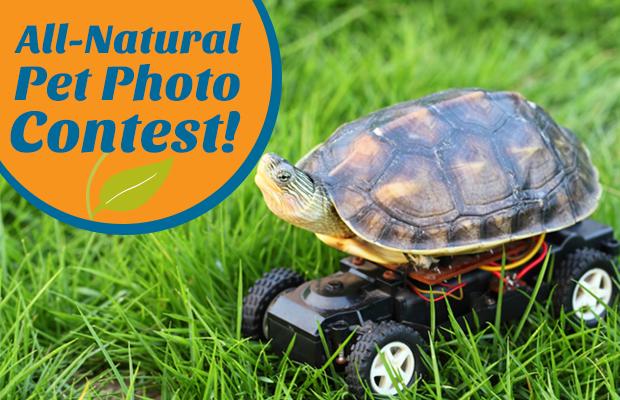 Pet-Contest-Blog-Feature