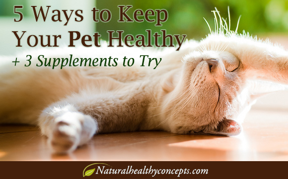 Keep Your Pet Healthy