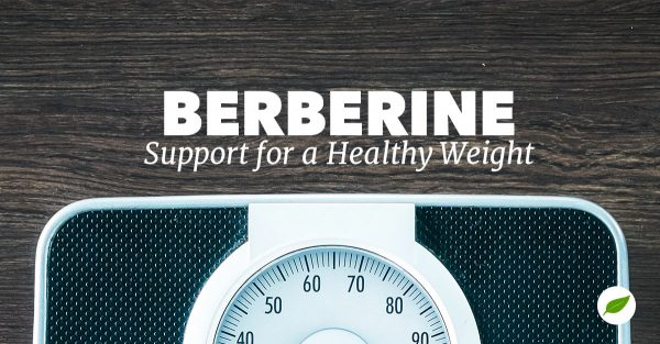 berberine for weight loss