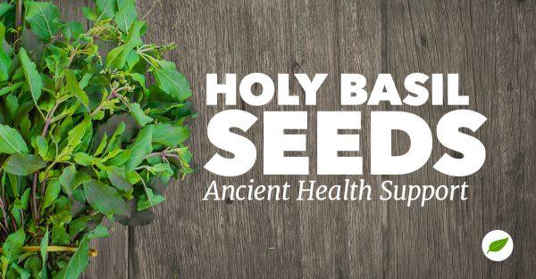 holy basil seeds