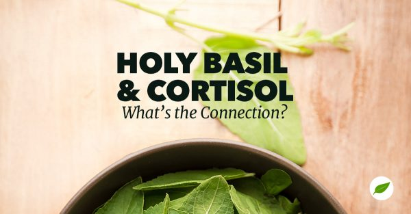 holy basil for cortisol