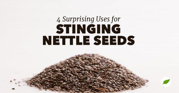 stinging nettle seeds