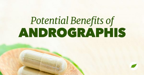 andrographis-benefits-cooling-herb