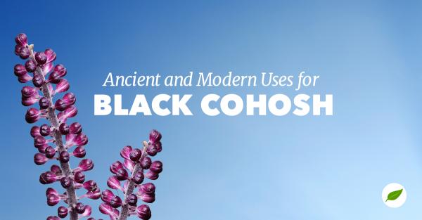 black-cohosh-uses