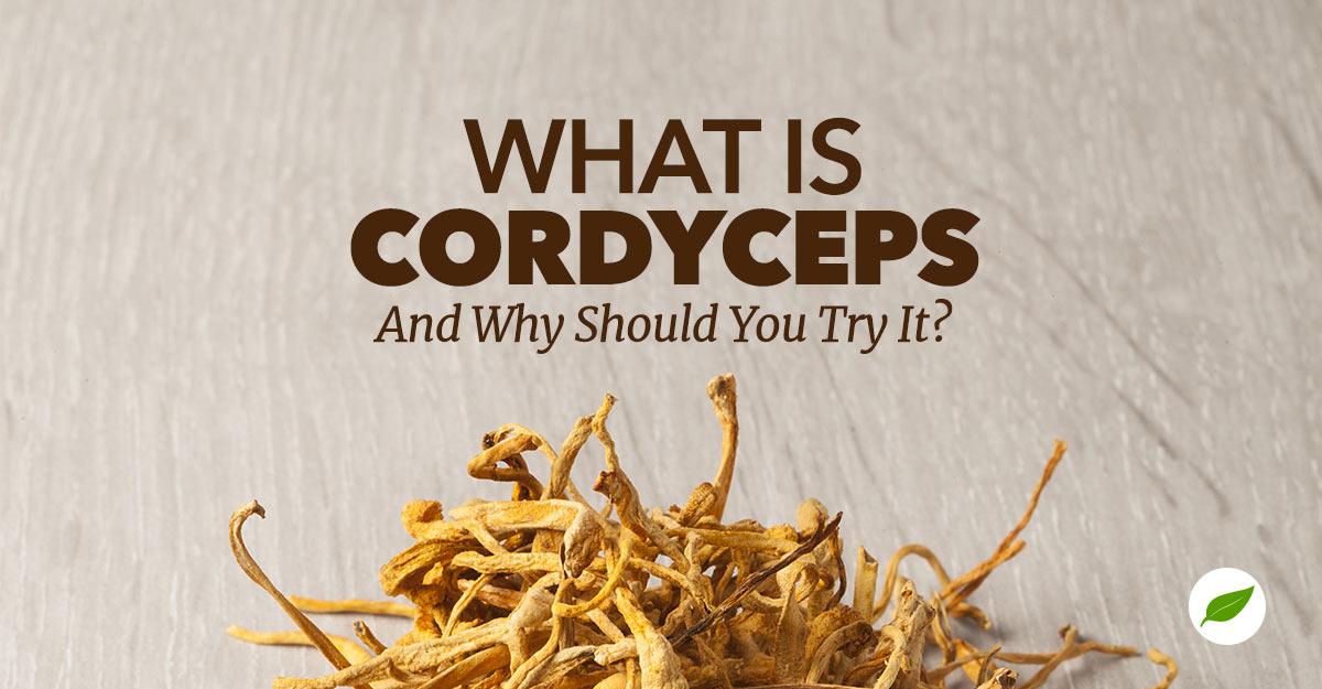 what is cordyceps