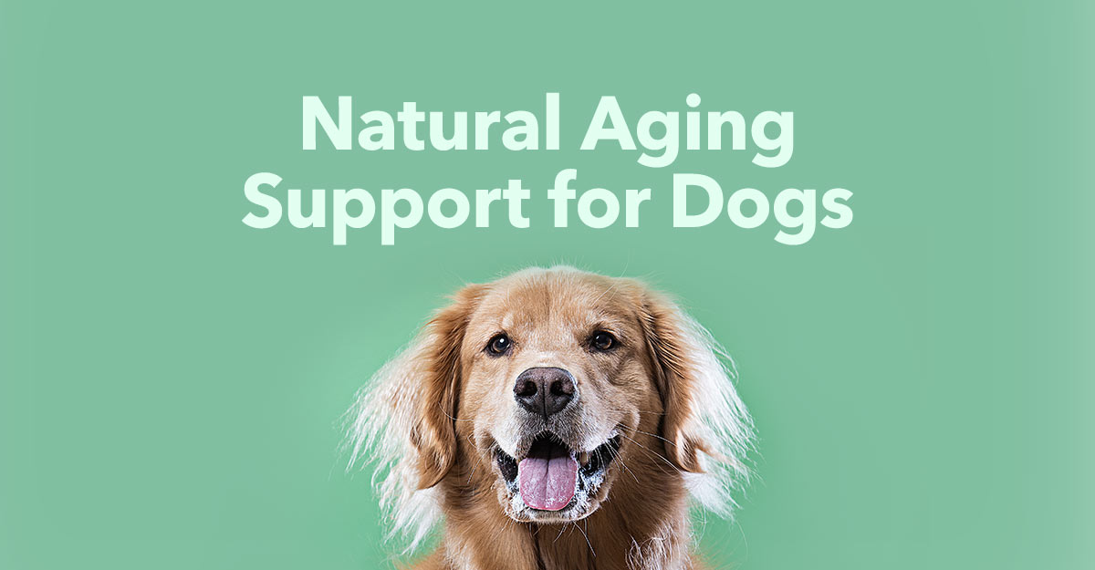 supplements-for-aging-dogs