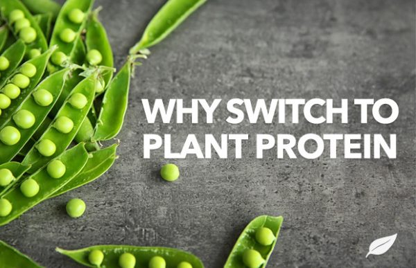 Why You Should Switch to Plant Protein