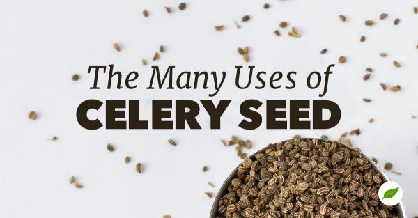 Celery-Seed-Uses