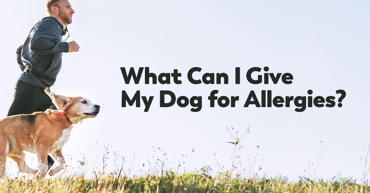 what can I give my dog for allergies